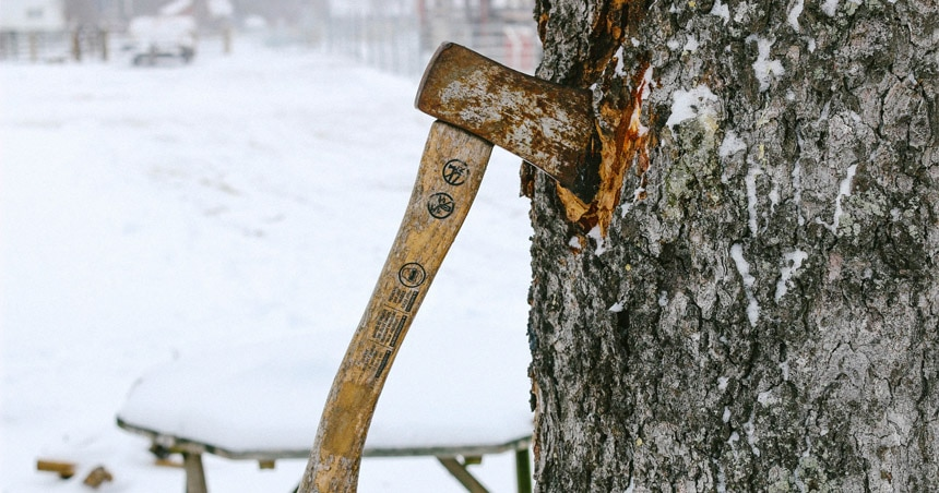 Throwing Axe Stuck In Tree